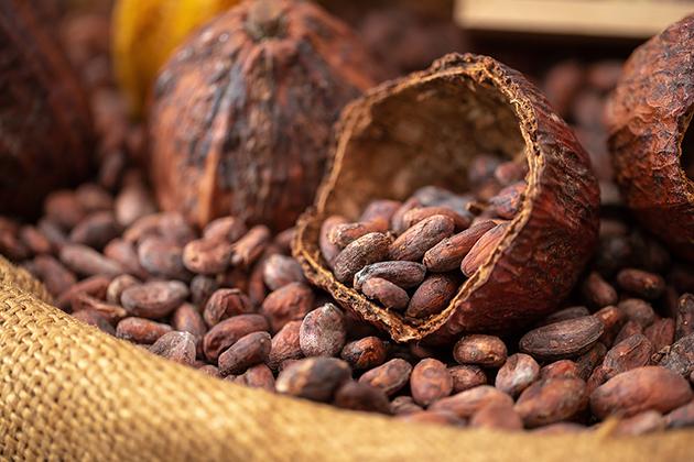 Какой шоколад полезнее темный или горький?